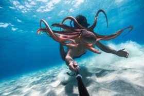 A man holding aGoPro Hero 9 with a stick underwater to shoot an octopus in front of his face