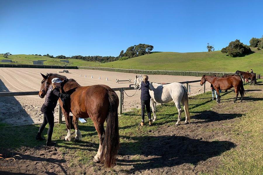Mornington Peninsula Horse Riding Melbourne