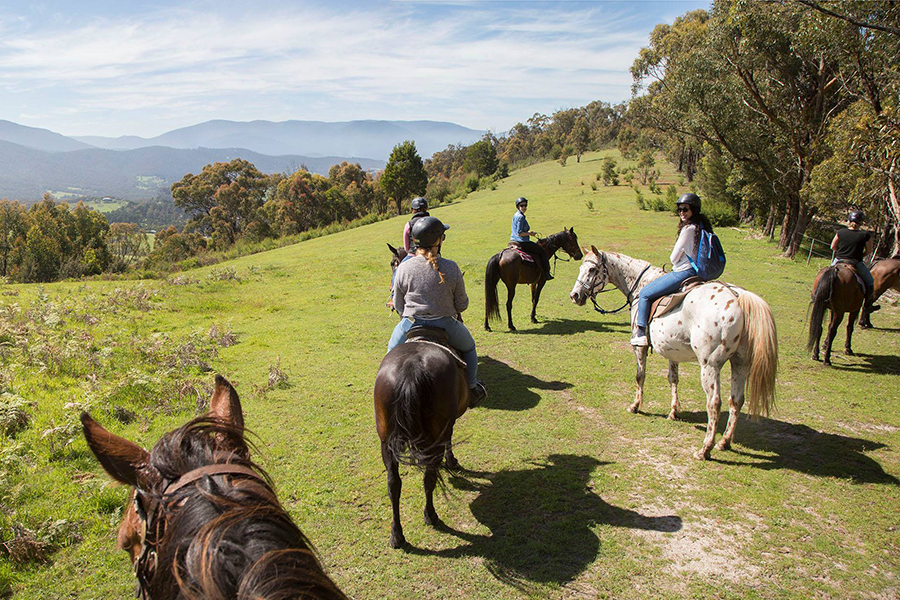 Yarra Valley Horse Riding Melbourne