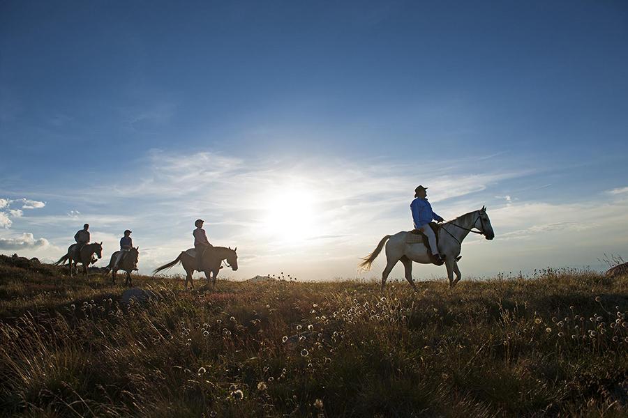 Horse Riding Melbourne