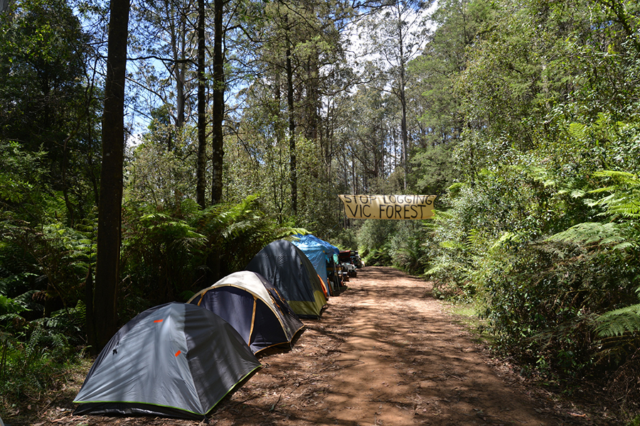 Free Camping Spots in Melbourne Toolangi Recreation Reserve