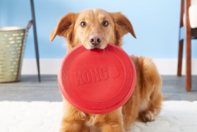 A dog holding KONG Classic Flyer Frisbee Dog Toy, Large with its bite