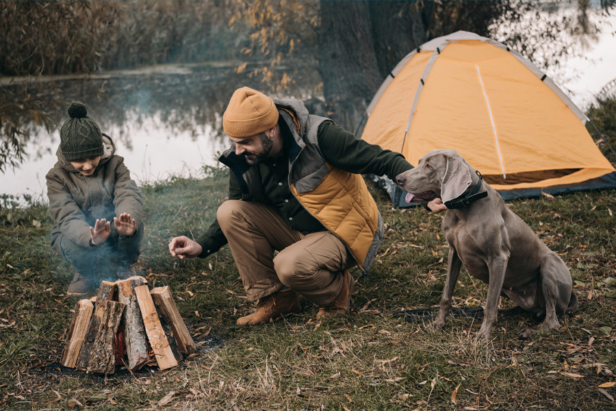 Dog-Friendly Camping Spots NSW