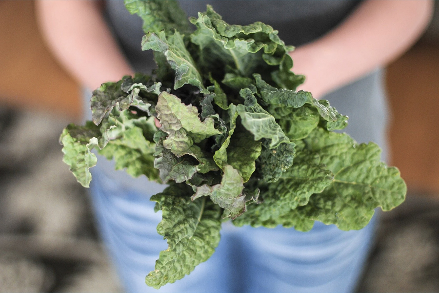 Health Benefits of Kale 4