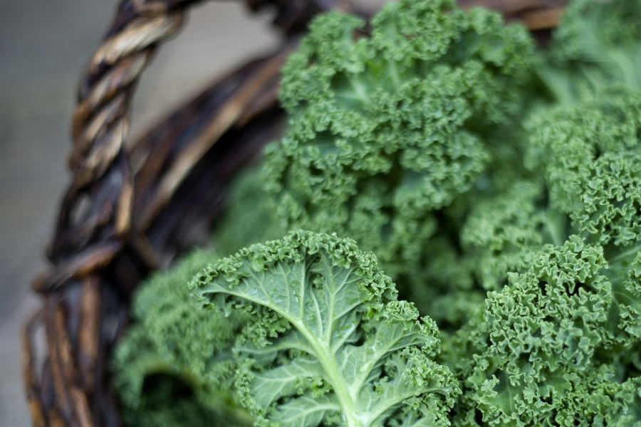 Health Benefits of Kale 1