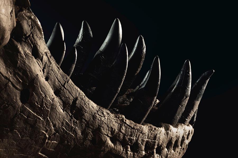 The Life of Stan T Rex teeth
