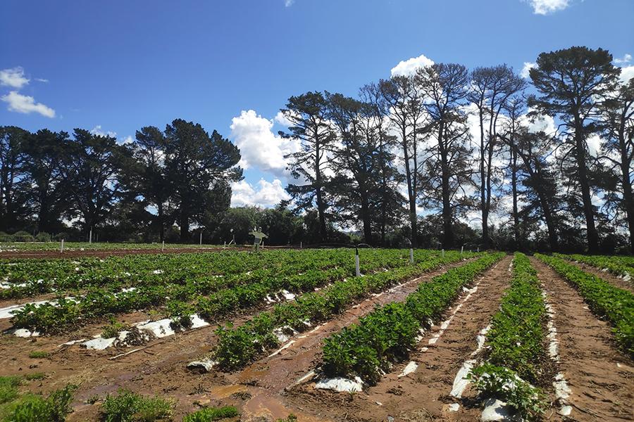 Huntley Berry Farm Best Family Fruit Picking Sydney