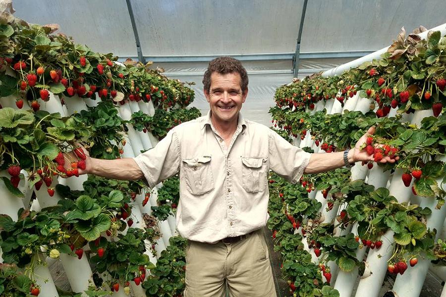 Ricardoes Tomatoes & Strawberries Best Family Fruit Picking Sydney