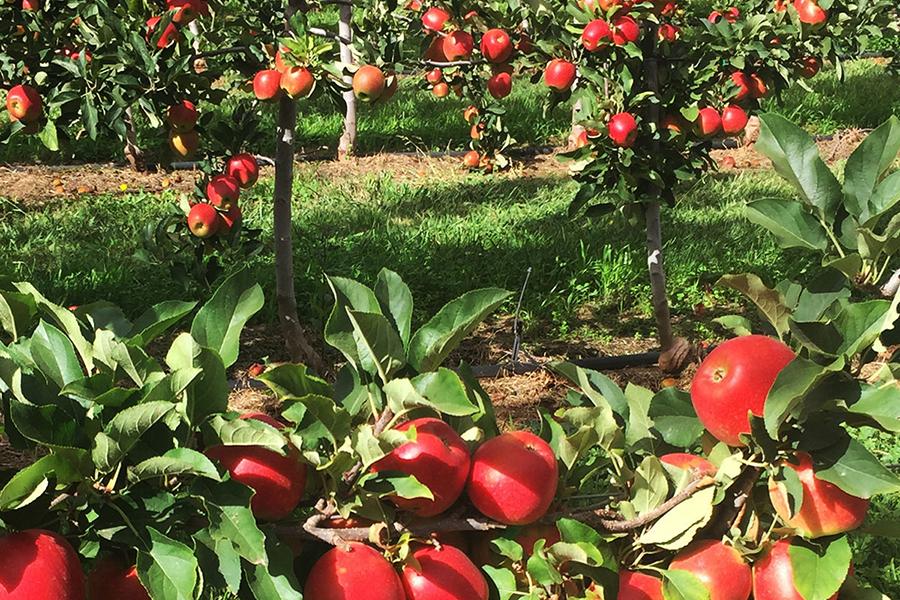 TNT Produce Best Family Fruit Picking Sydney