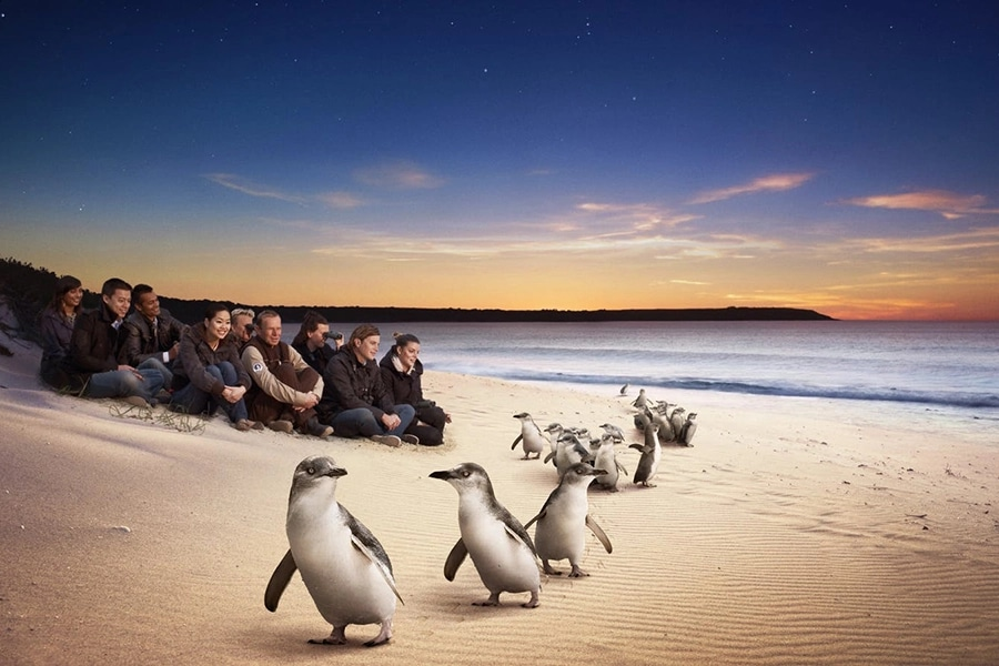 10 best day trip ideas from melbourne phillip island penguin parade