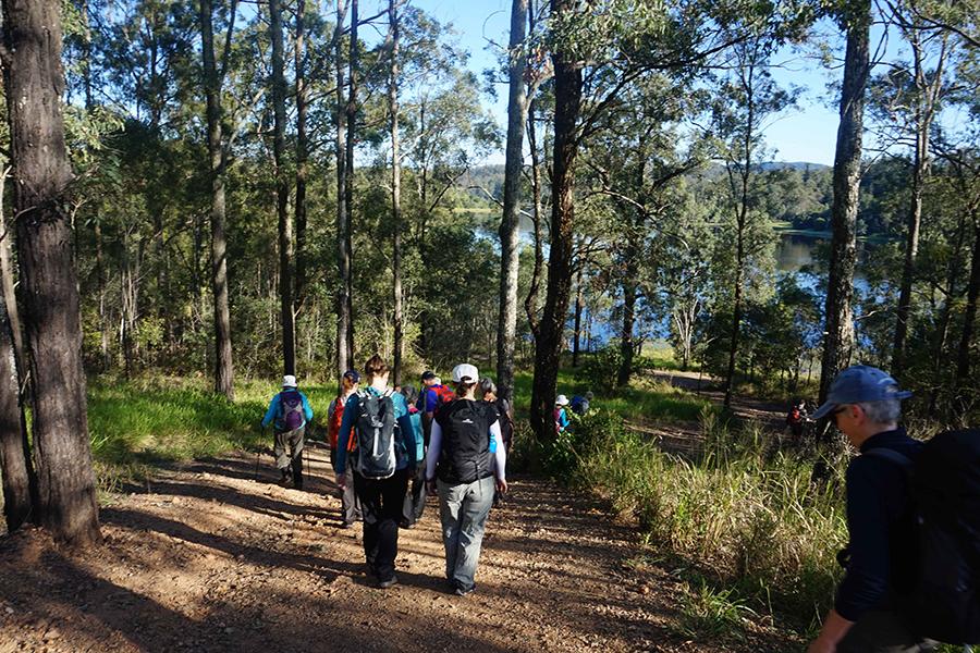 Best Walking Tracks in Brisbane Araucaria Track, Brisbane Forest Park