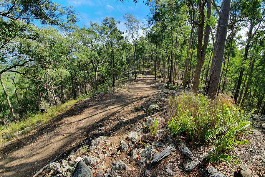 Best Walking Tracks in Brisbane Devils Break Loop, Moggill Regional Park