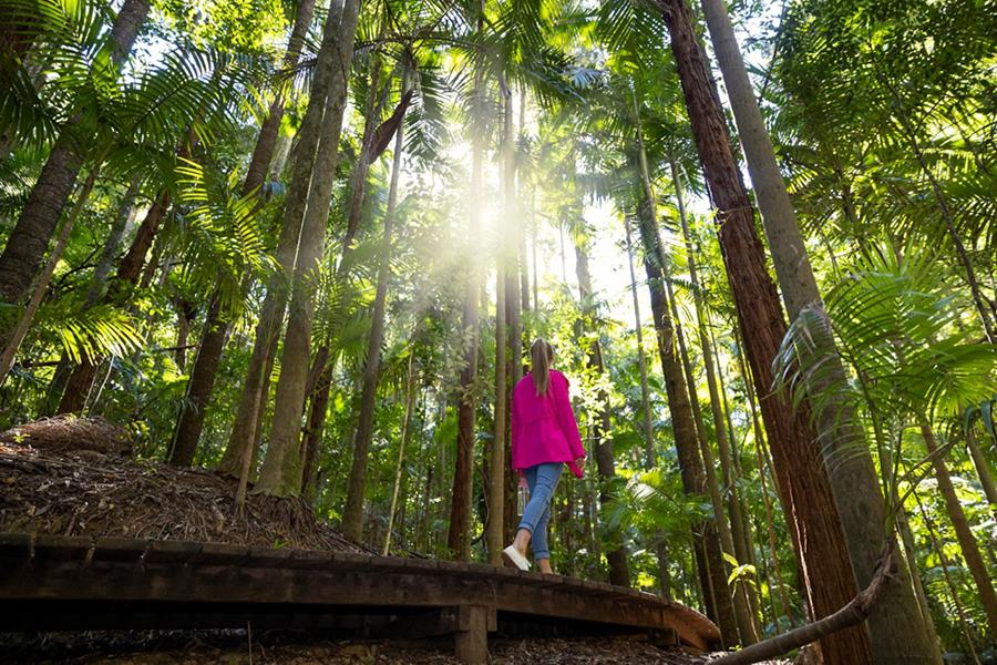 Best Walking Tracks in Brisbane Morelia Walking track, Mt Nebo, D'Aguilar National Park