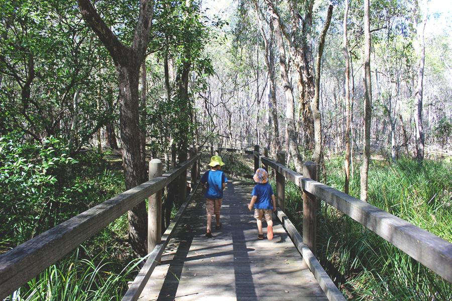 Best Walking Tracks in Brisbane Stockyard Creek walking track, Brisbane Koala Bushlands