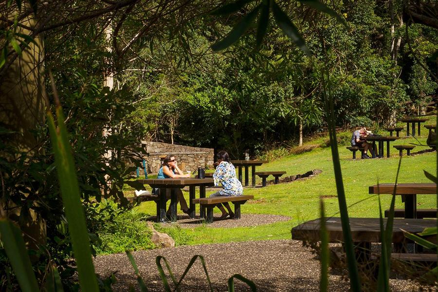 Best Camping Spots Near Brisbane Lamington National Park