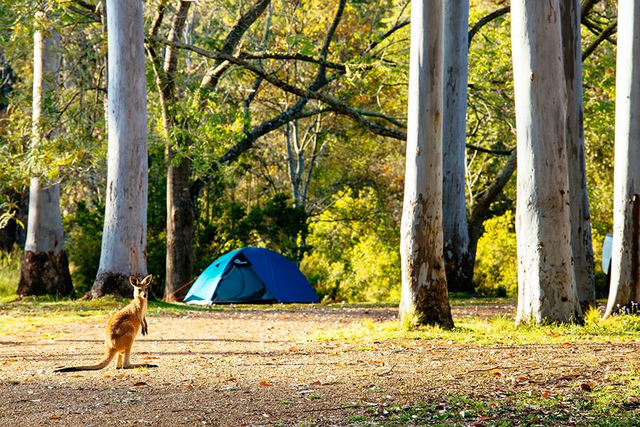 Best Camping Spots Near Brisbane Peach Trees Camping Area