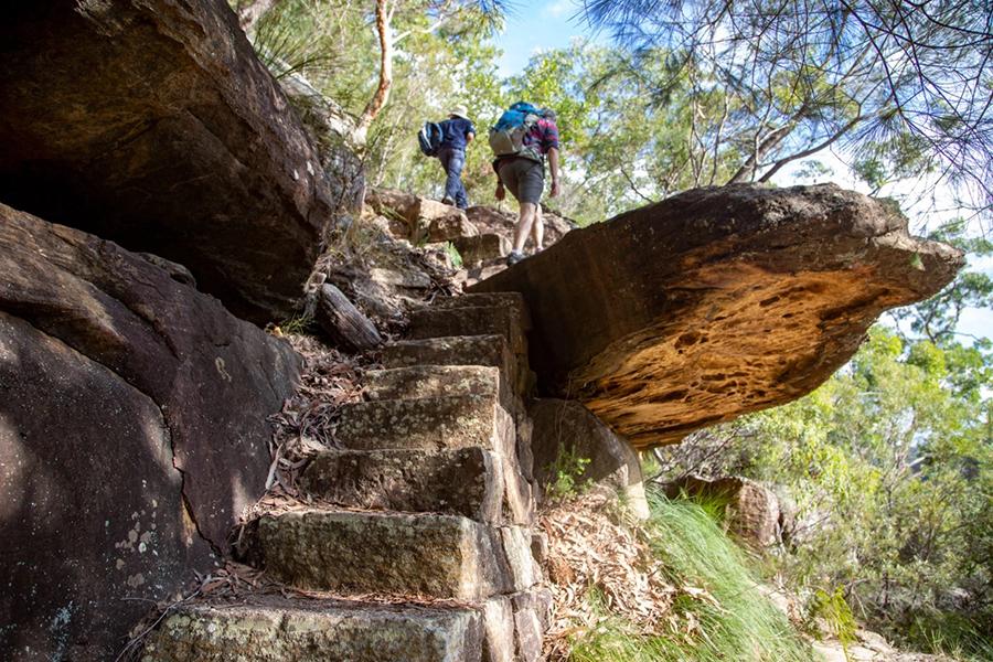 Best Walking Tracks and Trails Sydney Cowan to Berowra