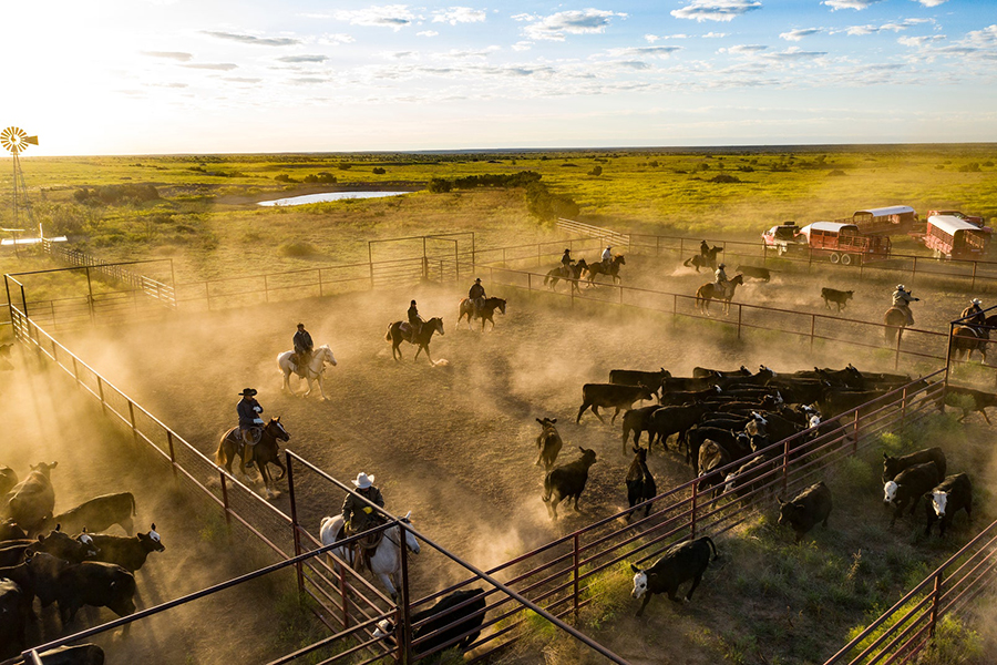 6666 Ranch up for sale horses