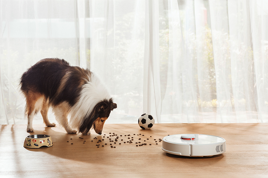 Roborock S6 in front of a dog eating food scattered on floor