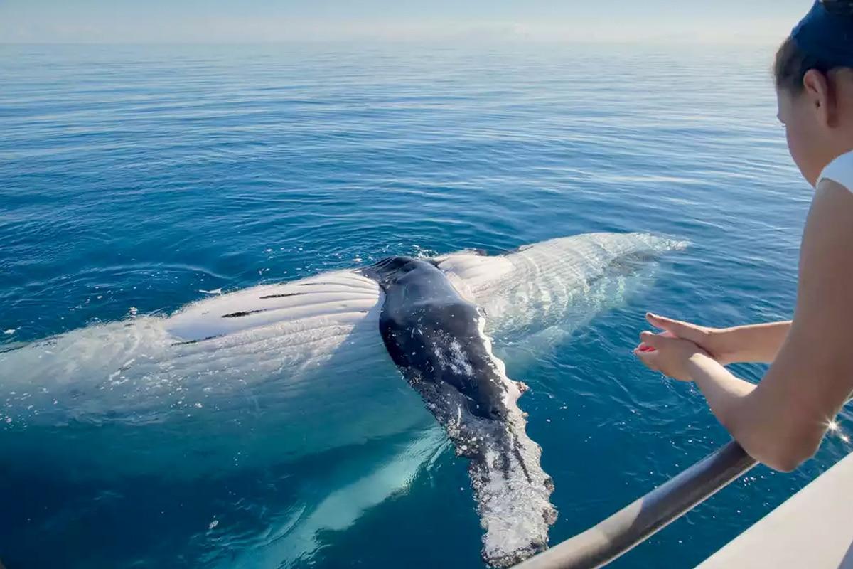 Harvey Bay - Top Australian Travel Destinations 2021