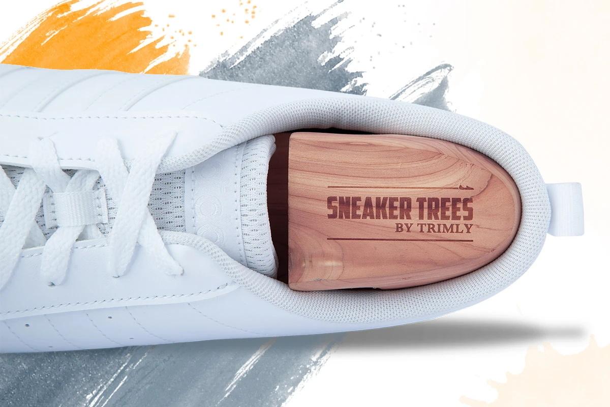 Sneaker Tree in a sneaker
