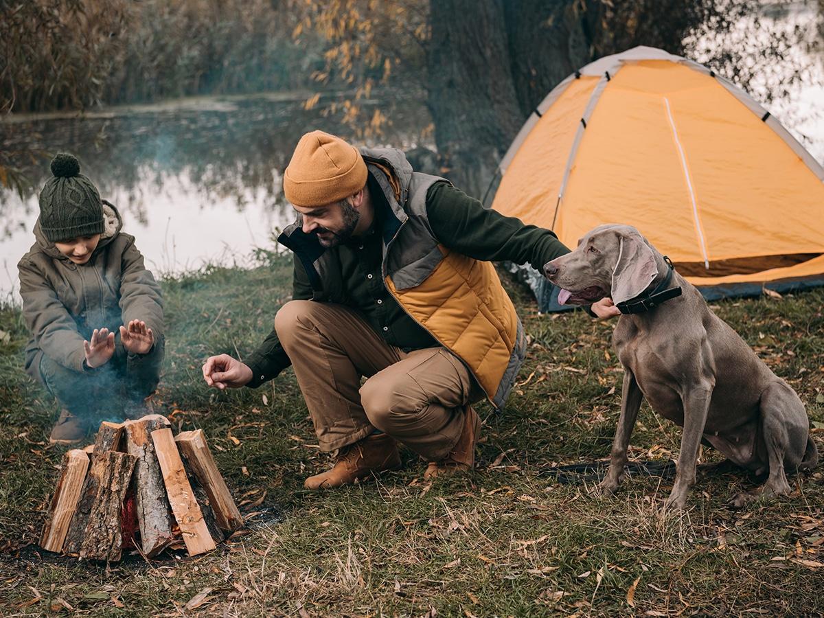 10 best dog friendly camping spots in nsw