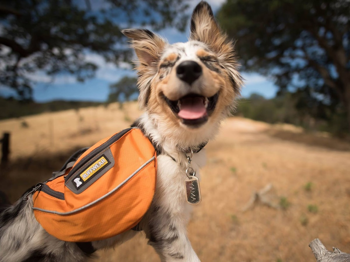 dog friendly camping spots in nsw