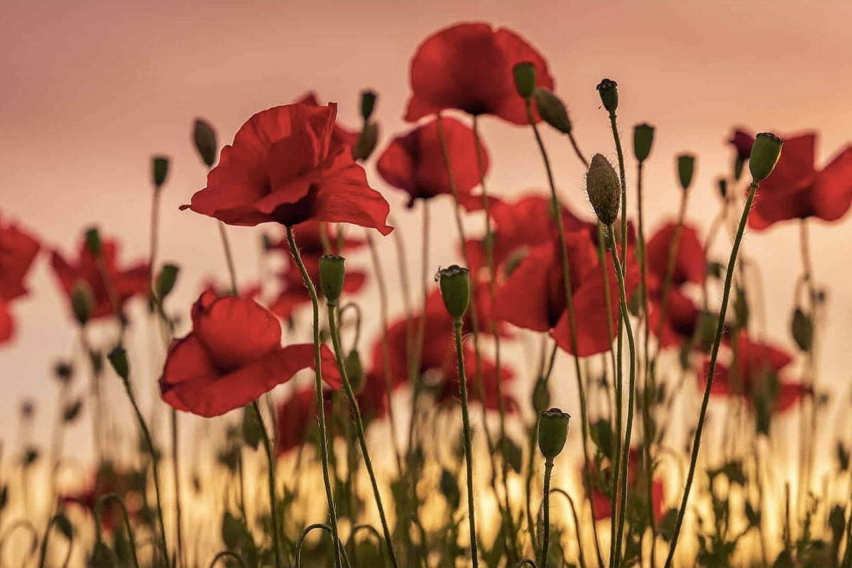 7 ways to commemorate anzac day at home