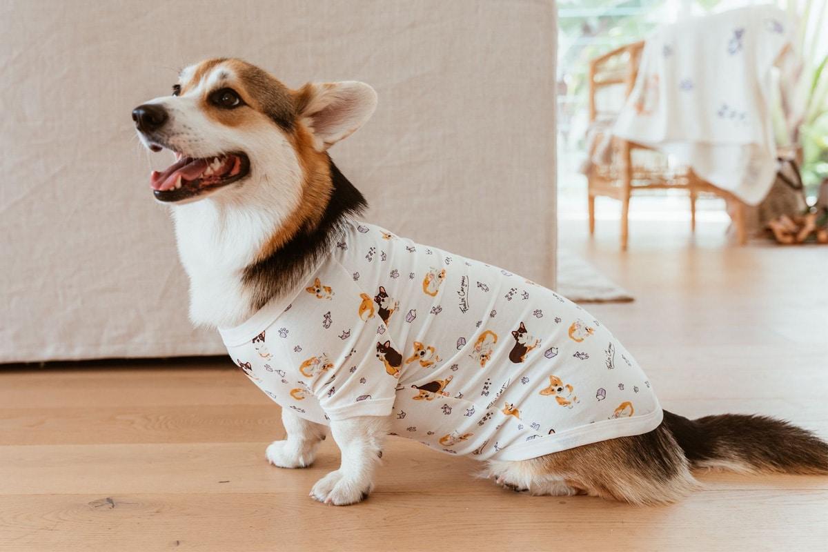 Stylish hound 4
