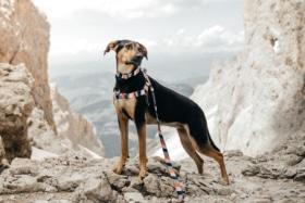 Stylish hound 8