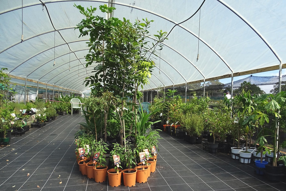 harvest seeds native plants interior