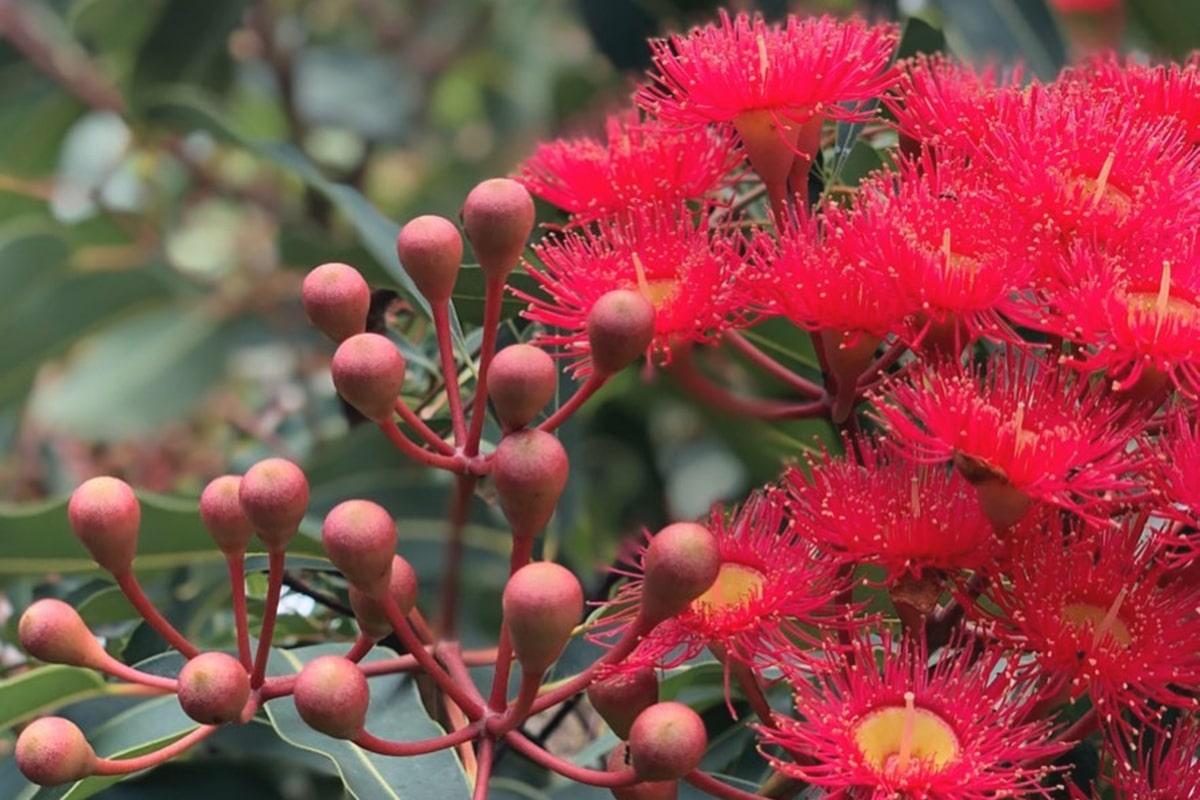 sydney wildflower nursery