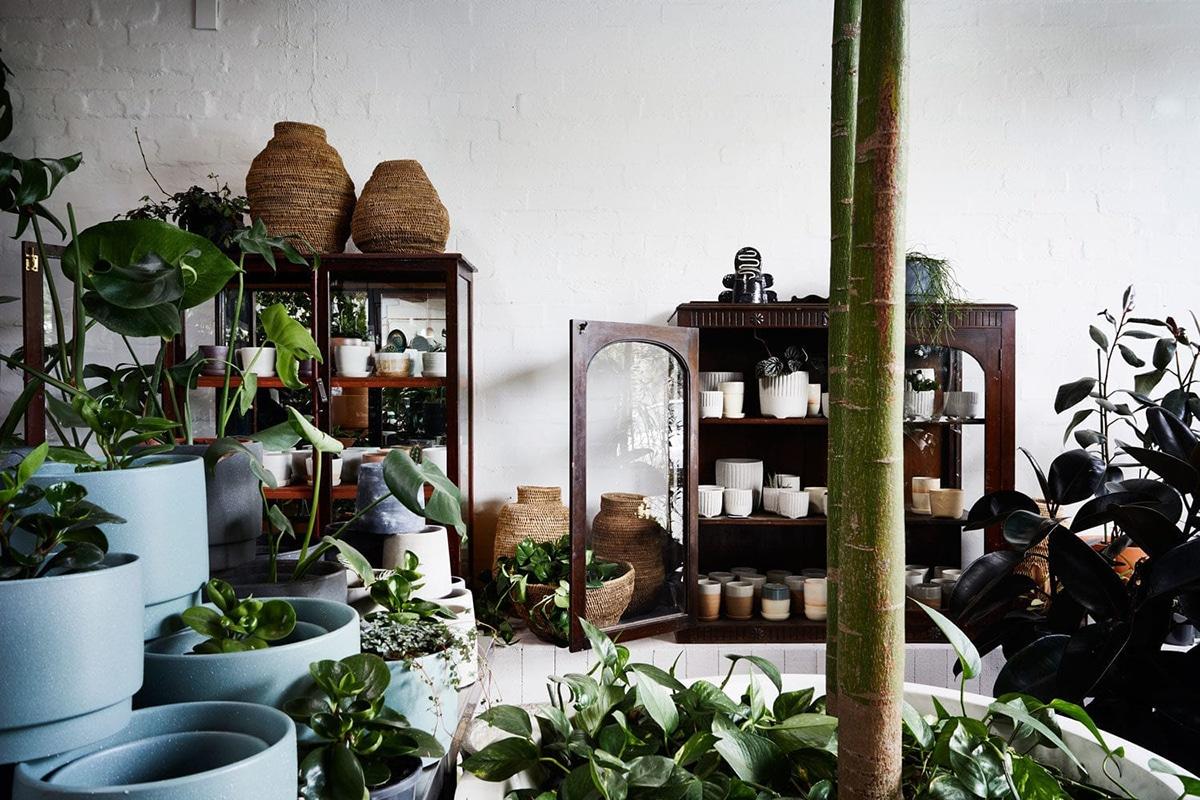the plant society sydney interior