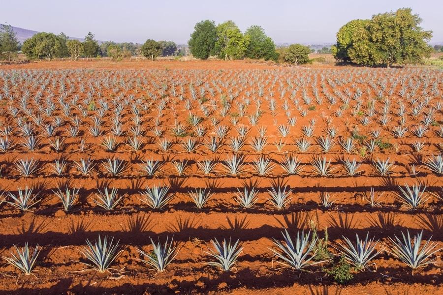 Mijenta tequila 1