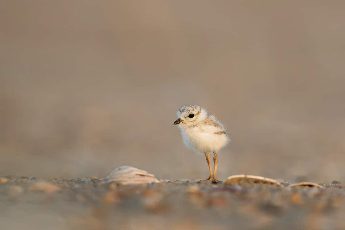 Smol bird