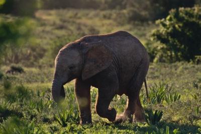 Feel-Good Friday: July 16 – Rhinos, Elephants and Vaccines