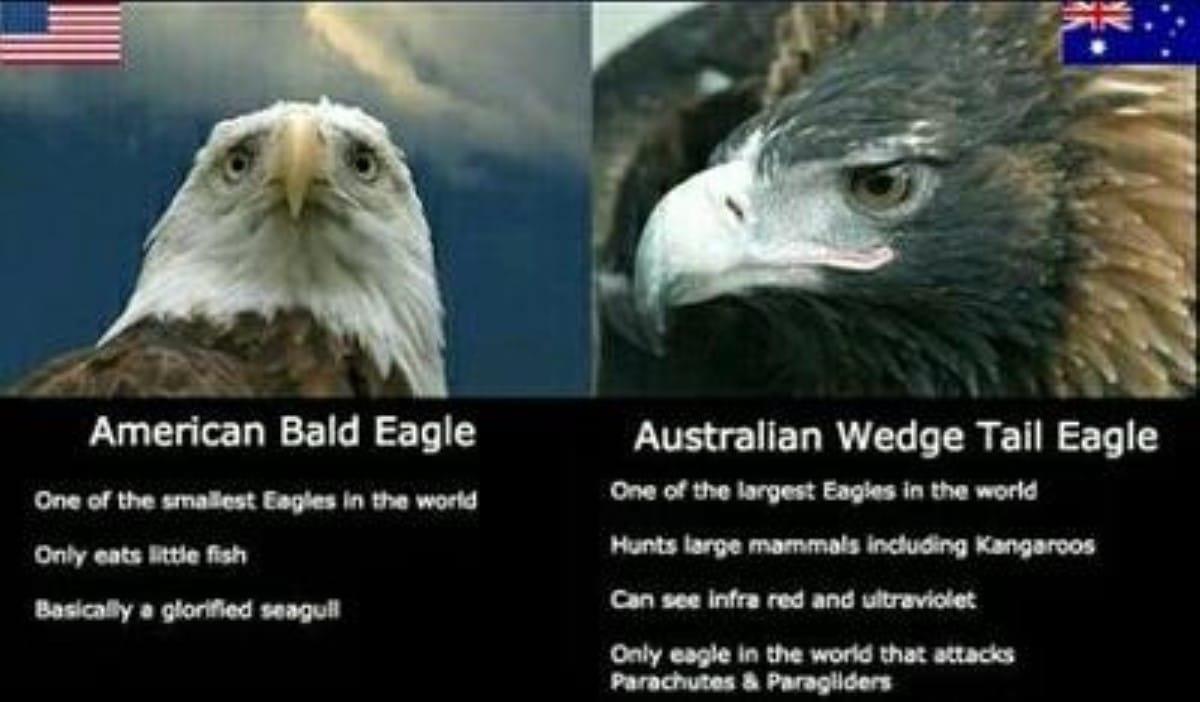 Best australian memes 101 1 1