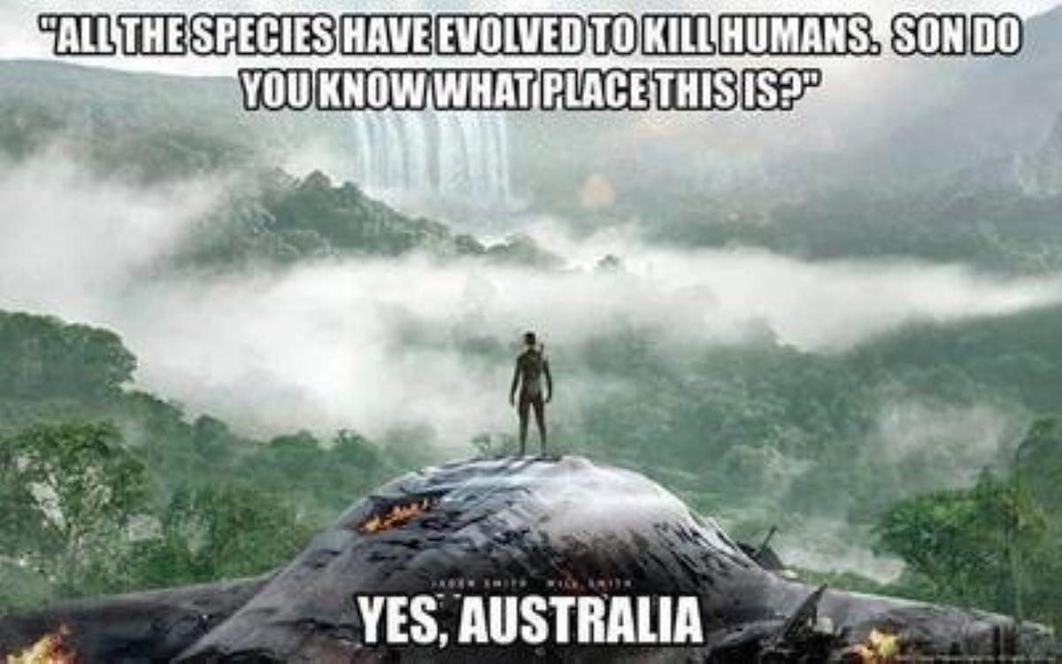 Best australian memes 105 1 1