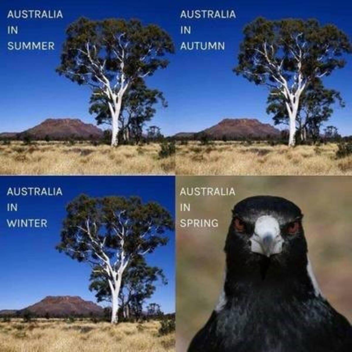 Best australian memes 132 1 1