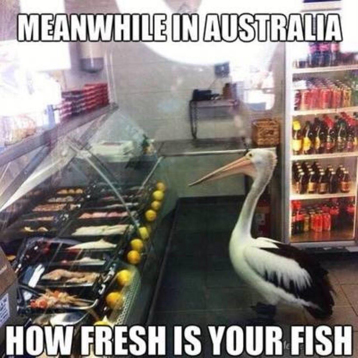 Best australian memes 167 1 1