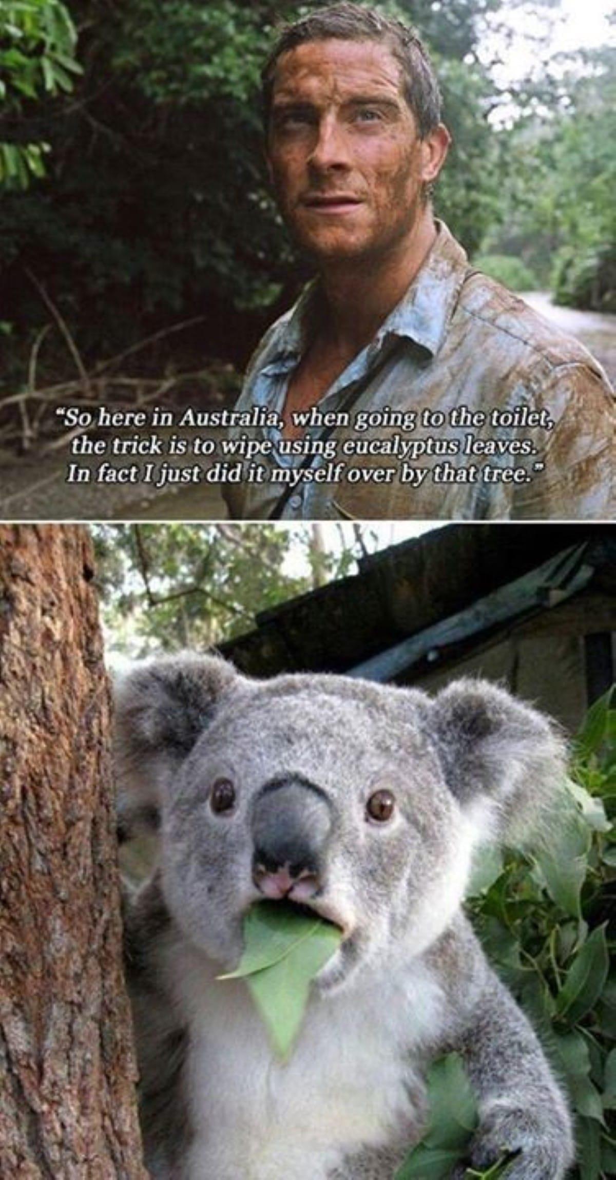 Best australian memes 186 1 1