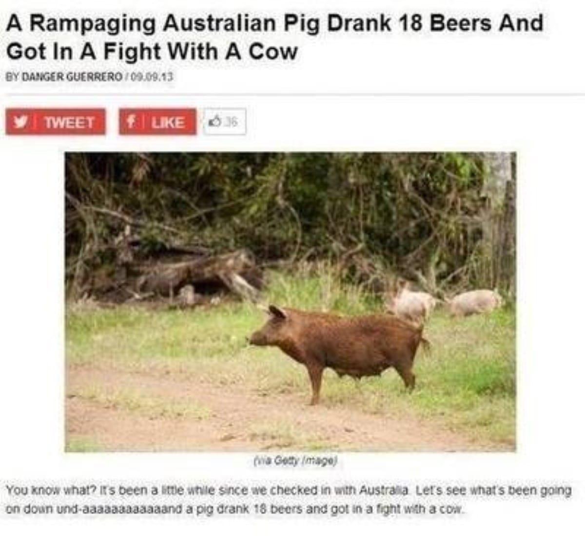 Best australian memes 190 1 1