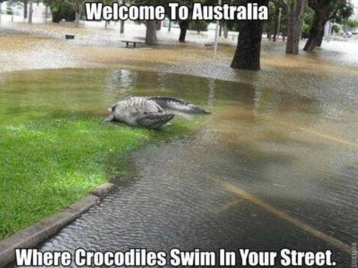 Best australian memes 191 1 1