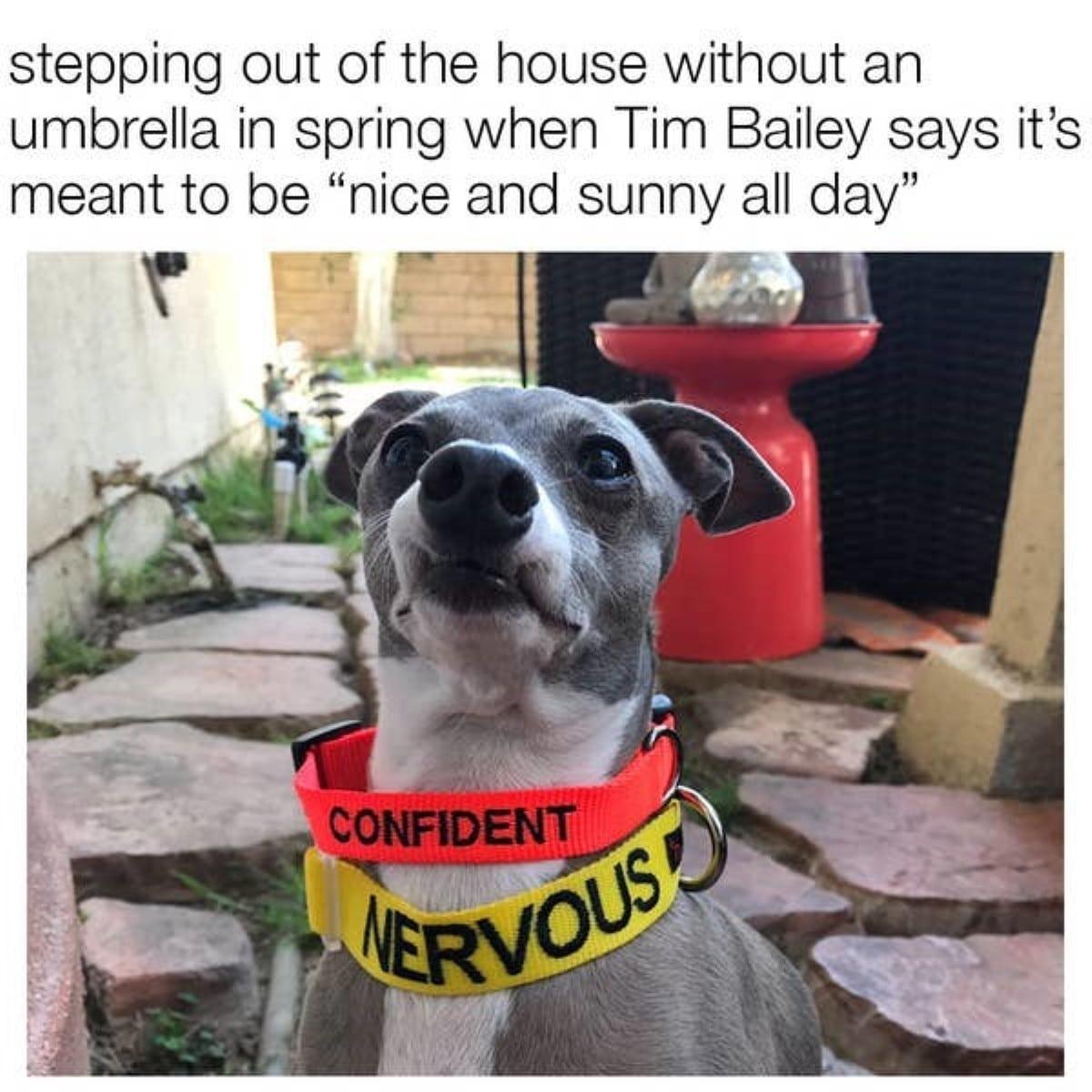 Best australian memes 89 1 1