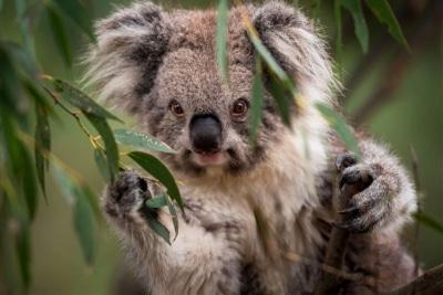 Feel-Good Friday: July 23 – Puppies, Pizzas and Diamond Encrusted Koalas