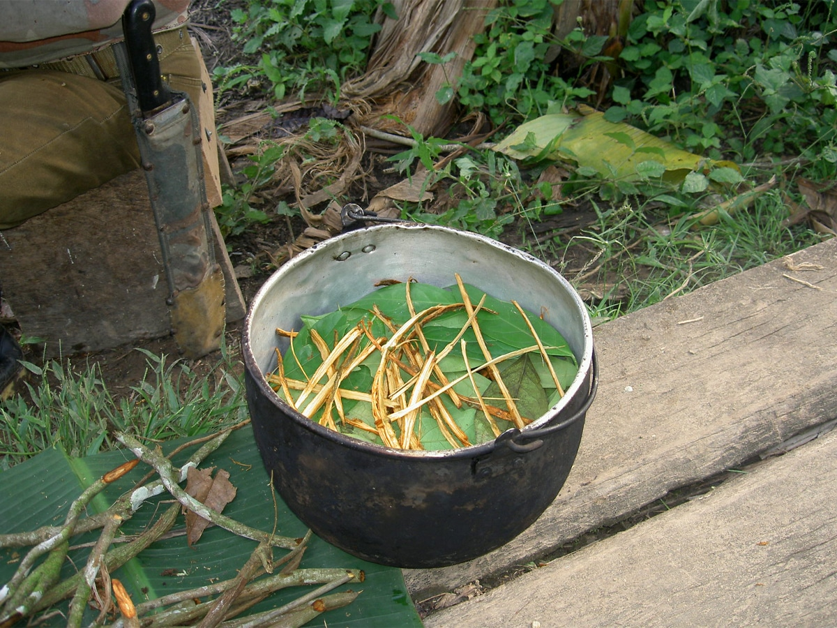 What are the effects of ayahuasca