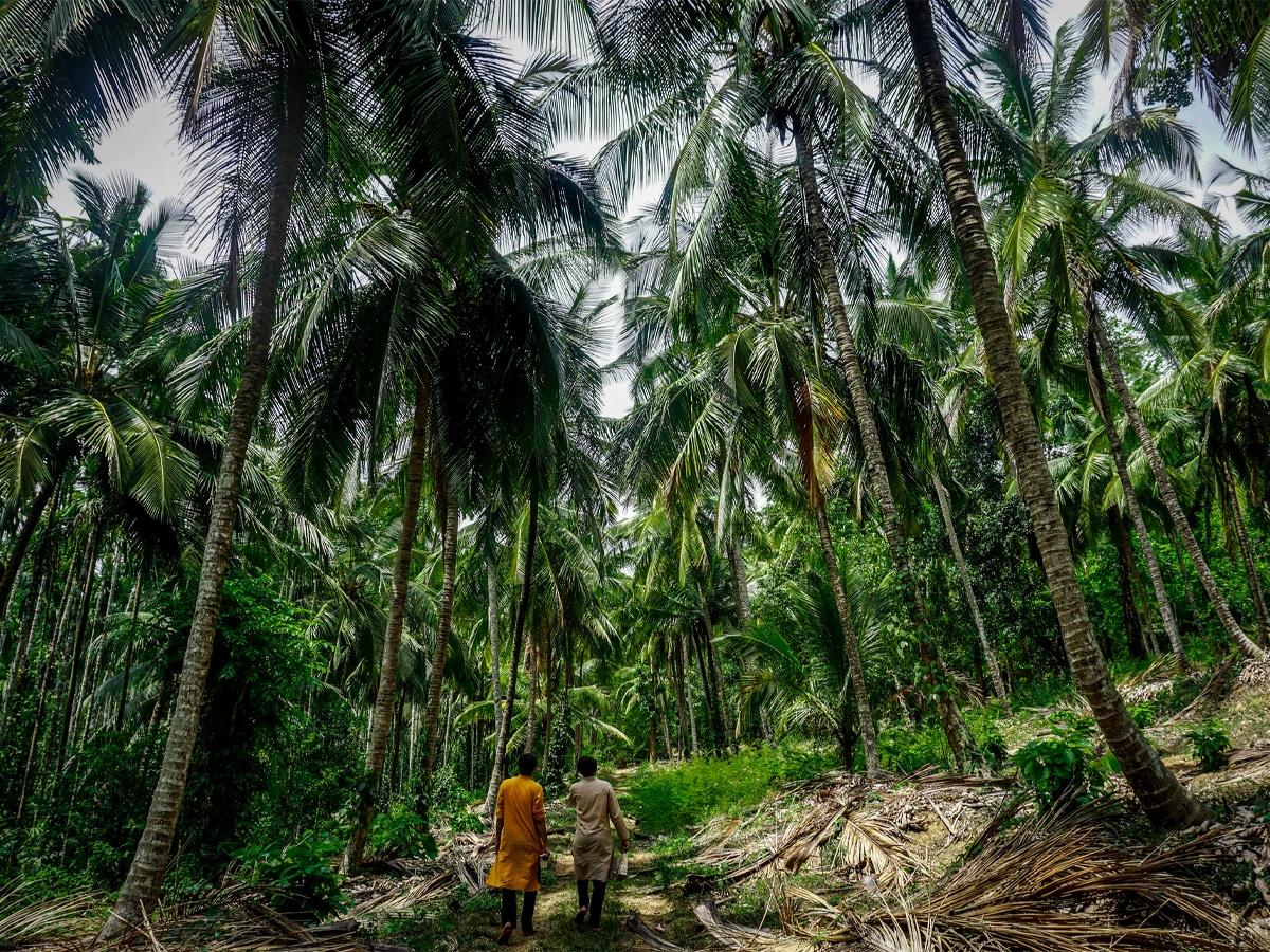 Where do people take ayahuasca