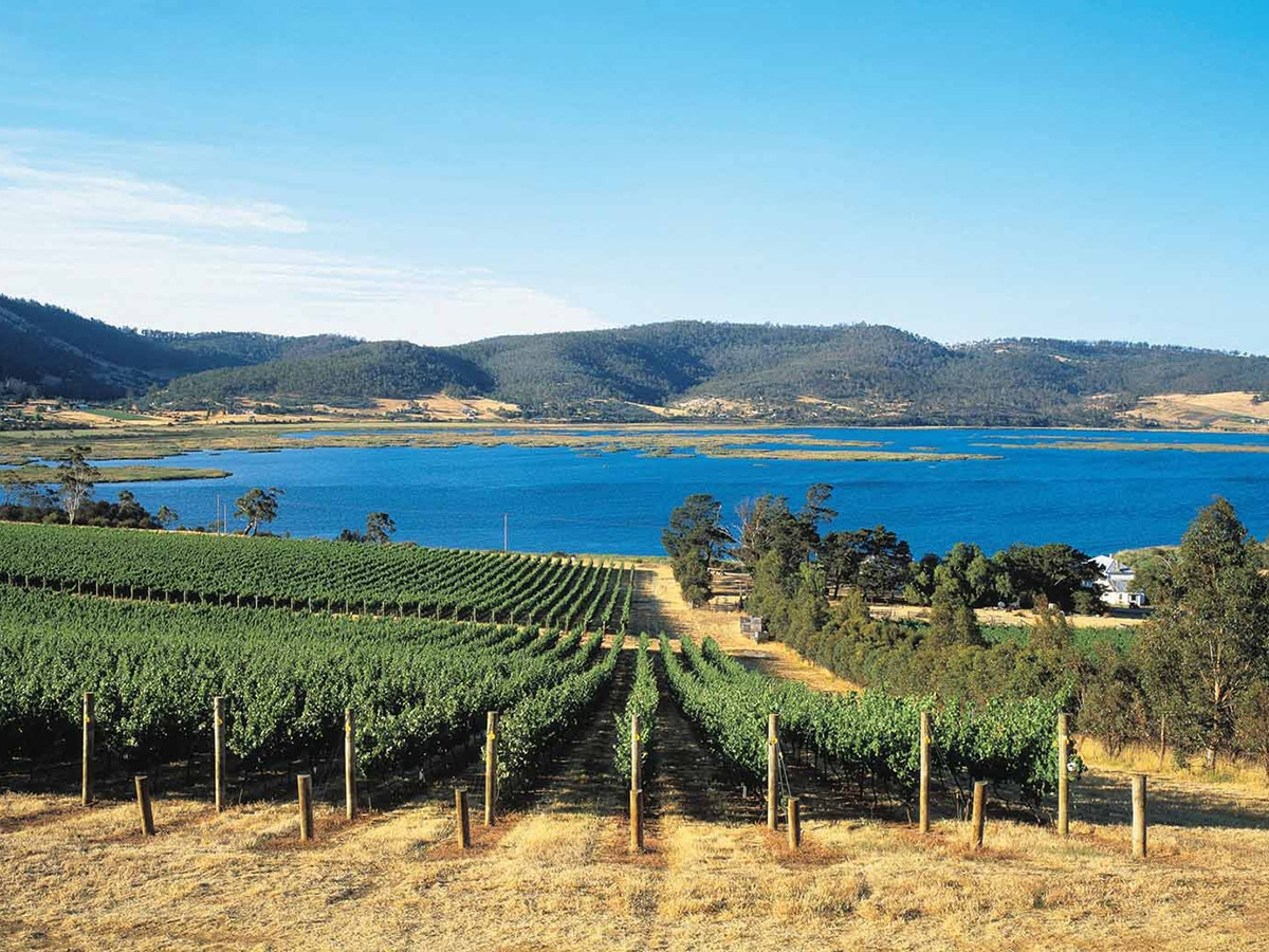 derwent estate vineyard lookout