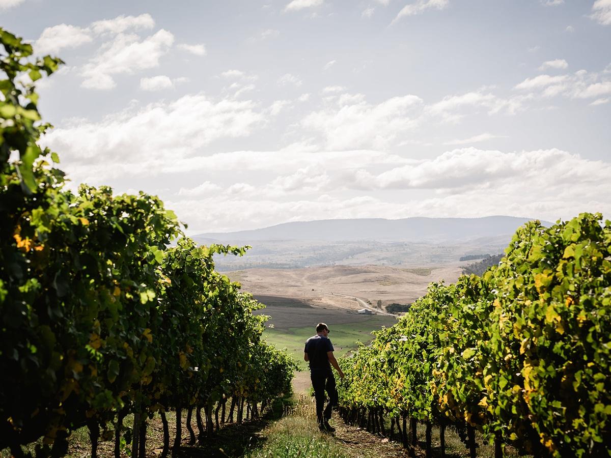man walking through vines at dixon family winemakers