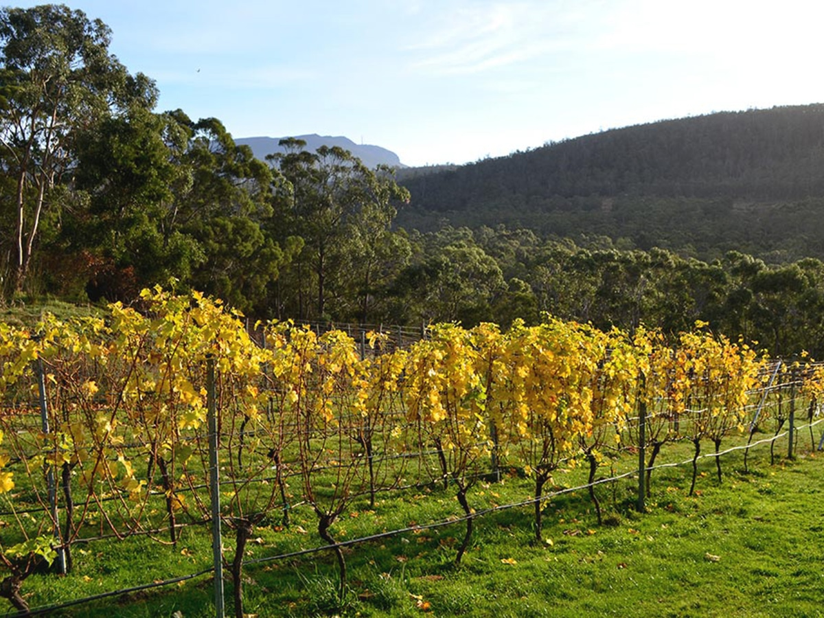 nandroya wines lookout
